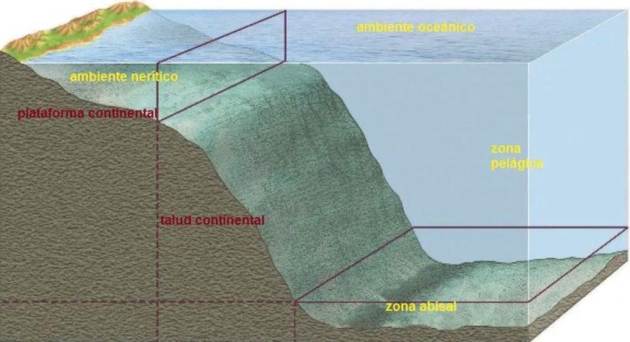 Fondos abisales - Oceanos y mares -5
