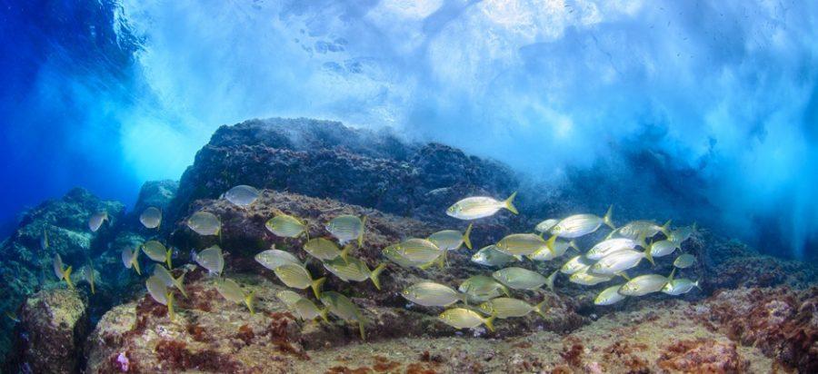destinos para bucear en las Islas Canarias