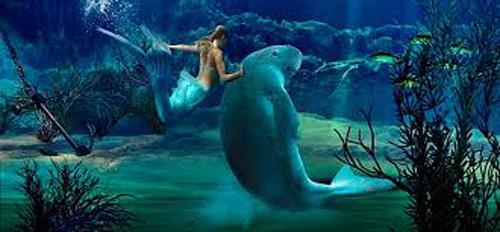 Los mejores acuarios y oceanograficos de japon y australia for Acuarios zona norte