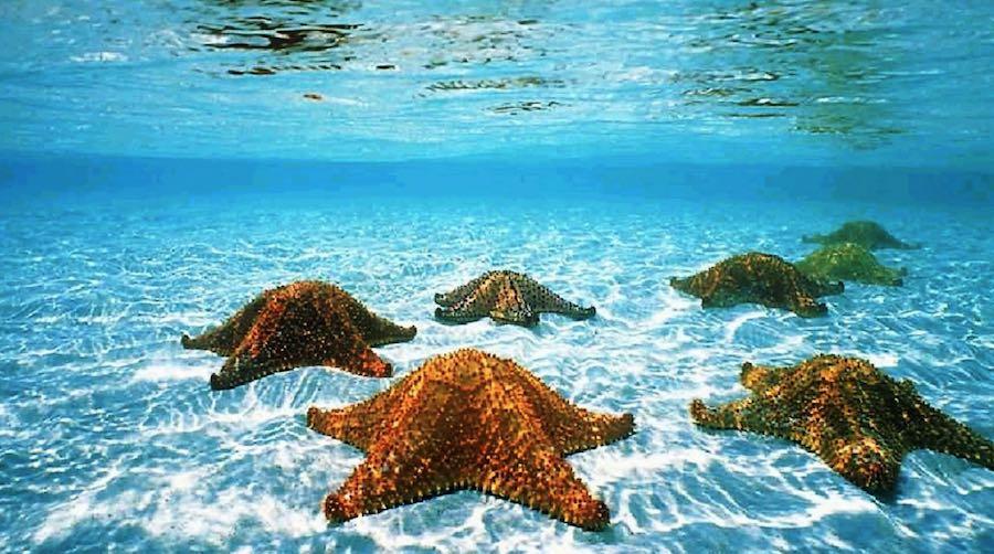 Estrellas De Mar Todo Lo Que Siempre Quisiste Saber
