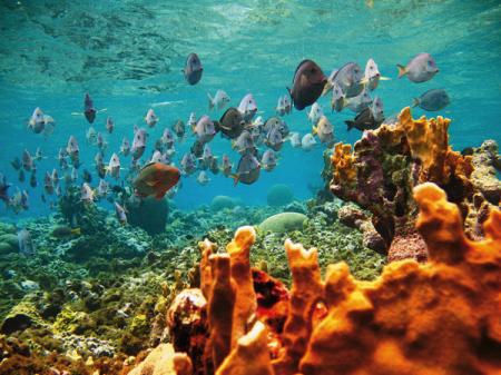 En el caribe esta el peque o para so del buceo de san andres - El colmao de san andres ...