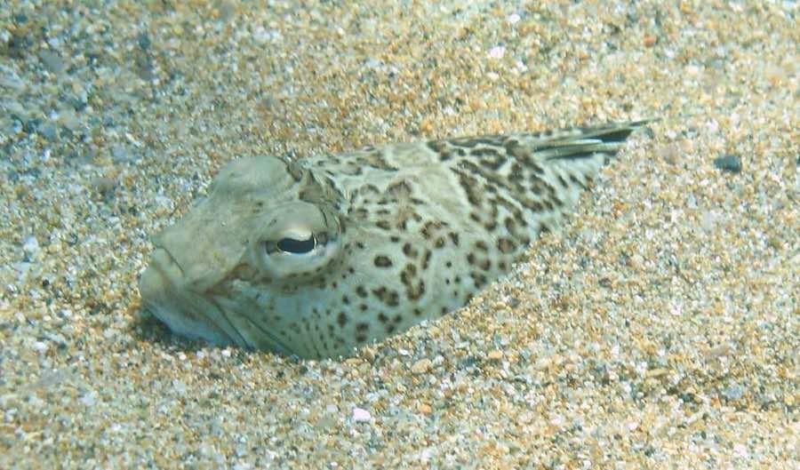 Fauna marina de las aguas mediterráneas