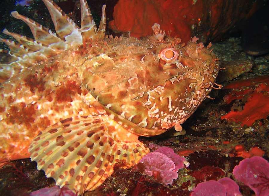 animales marinos del mar mediterrneo