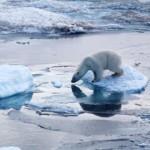 Preocupacion de los investigadores por el destino icebergs antárticos