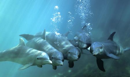 violencia contra los delfines