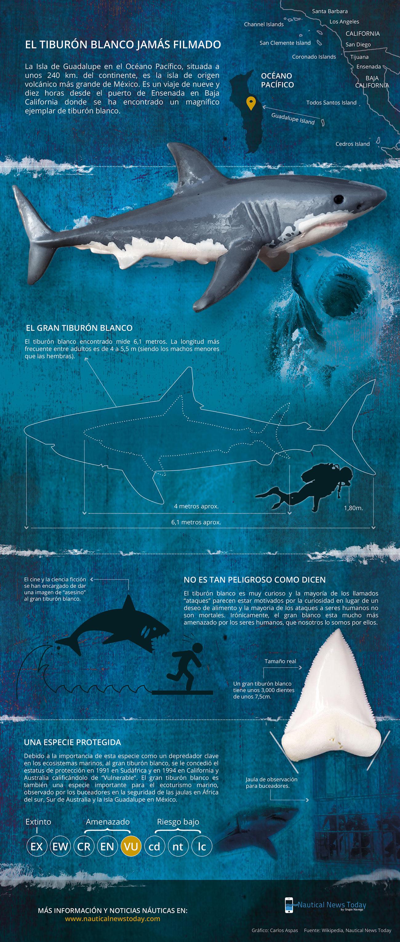 Infografía Tiburón Blanco