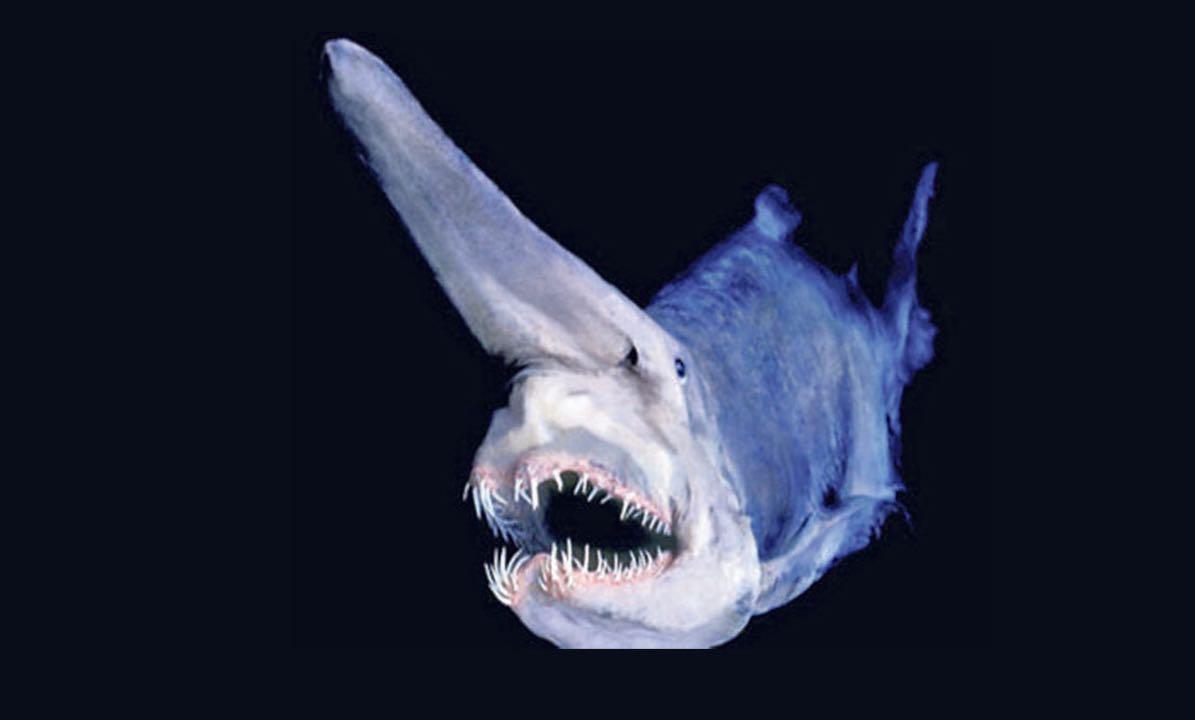 El tibur n duende voraz y terror ficamente prehist rico - El duende blanco ...