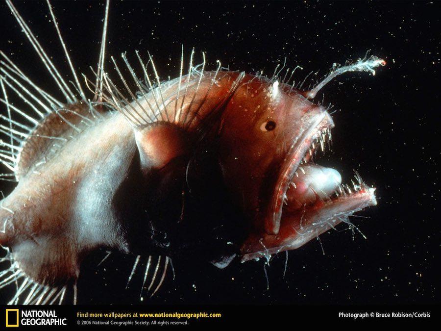 Monstruos Marinos pez pescador