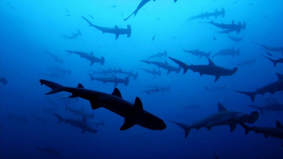 tiburon linterna ninja 3
