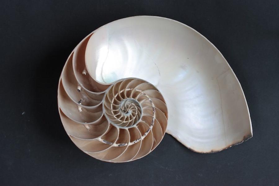 Nautilus 3
