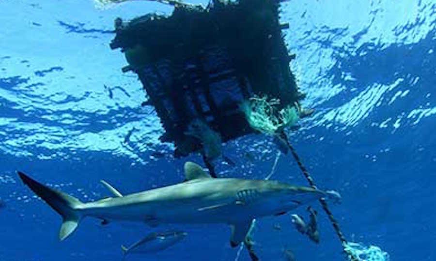 en que consiste la pesca: