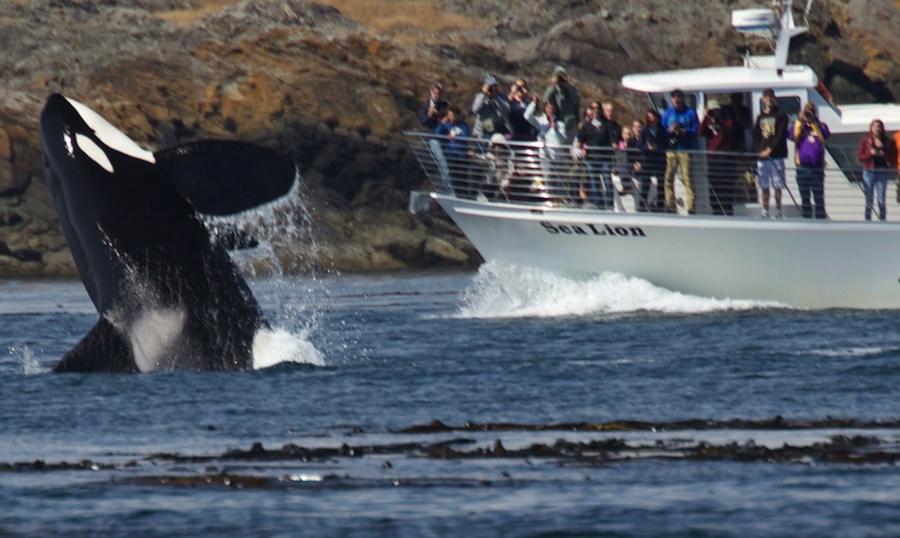 Aquarium vs whale watching 3