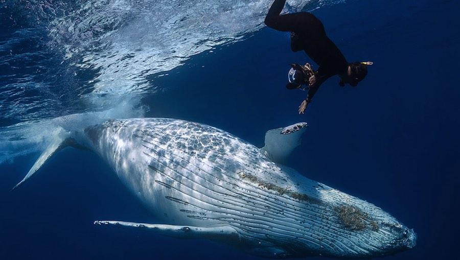 Avistamiento de ballenas 2