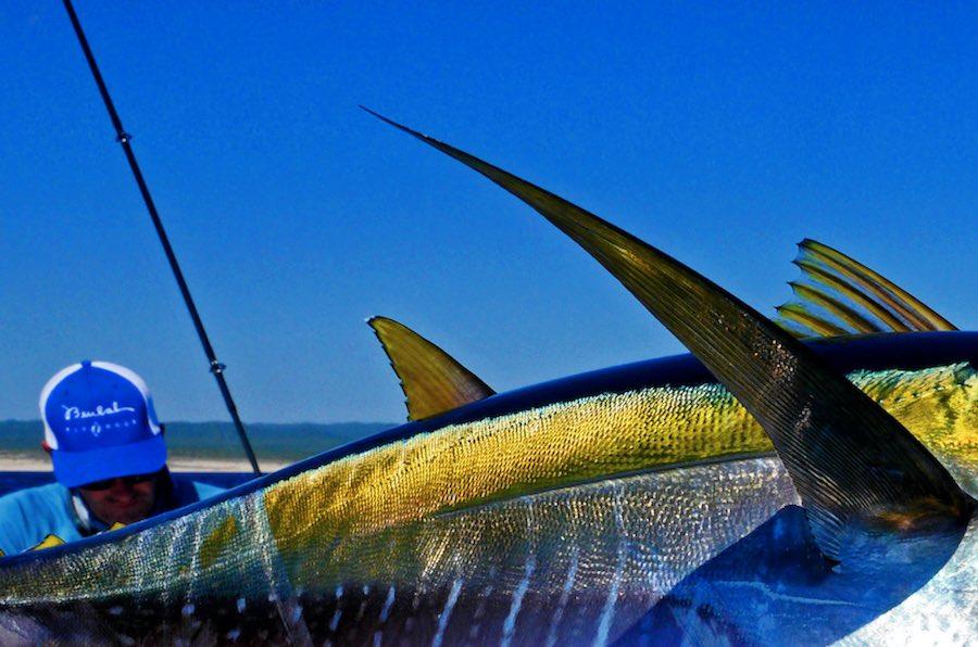Cañas de pescar Pesca de Altura 3