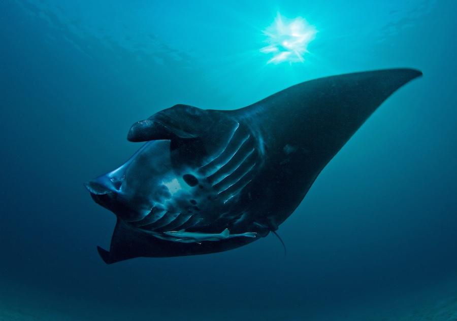 avistamiento de ballenas 0