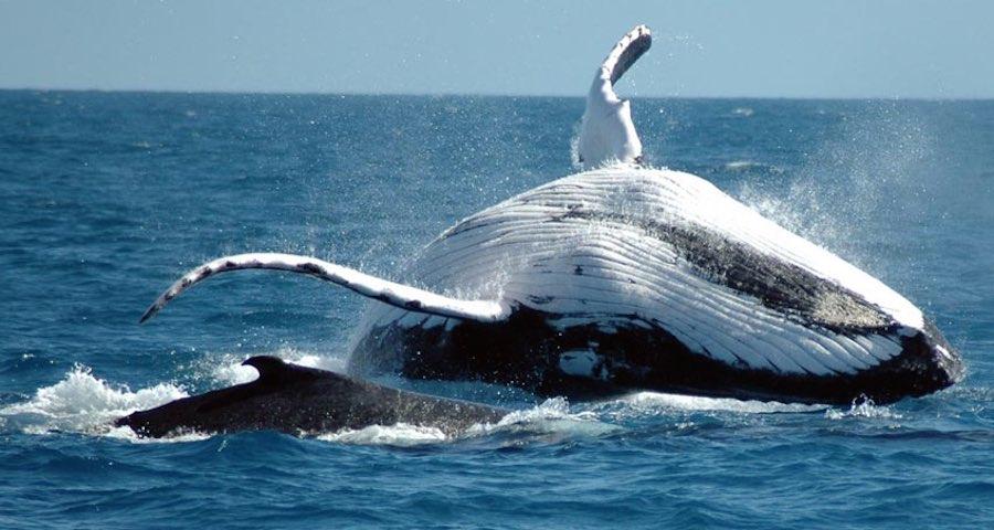 avistamiento de ballenas 3