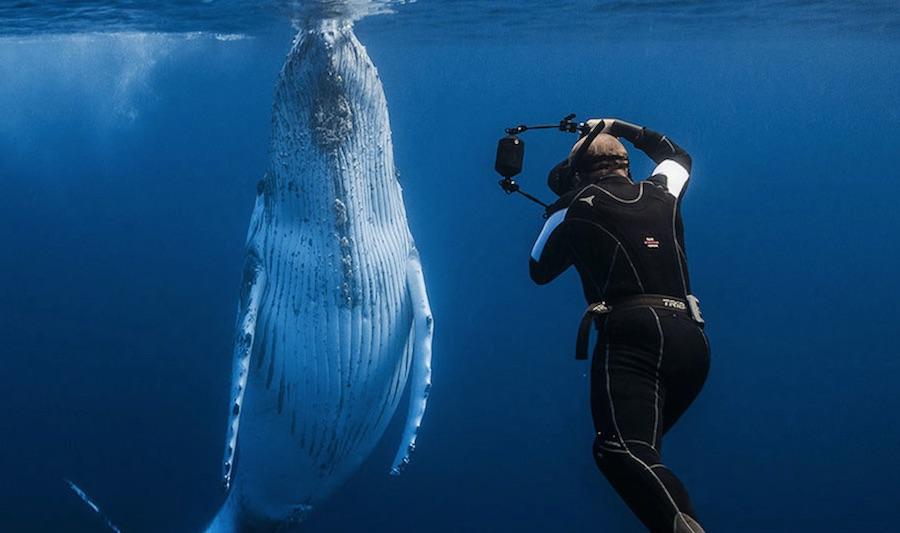 avistamiento-de-cetaceos-tonga99
