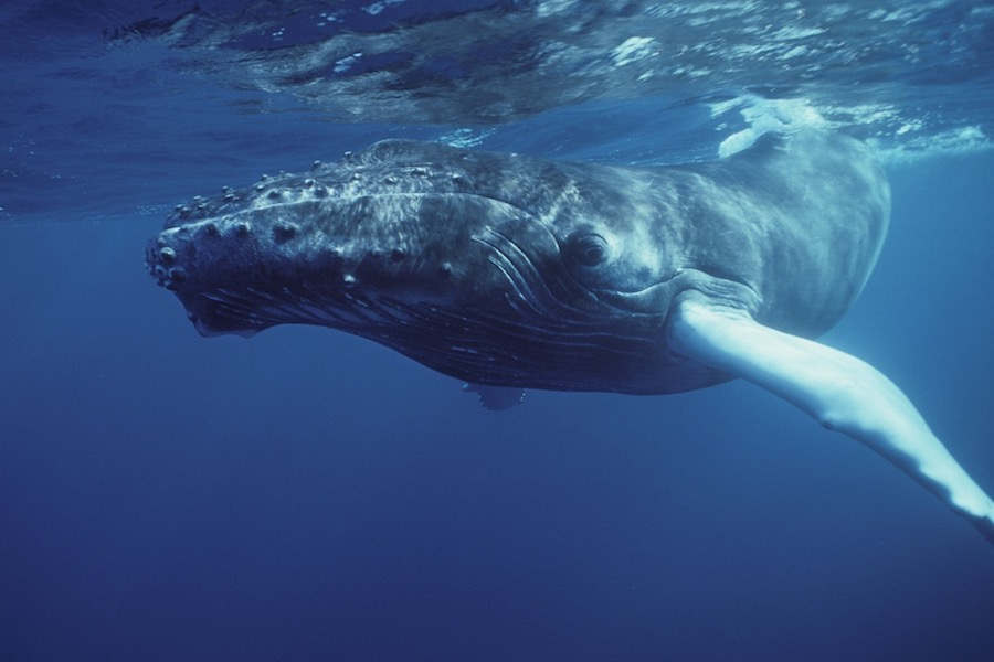 ballenas liberadas