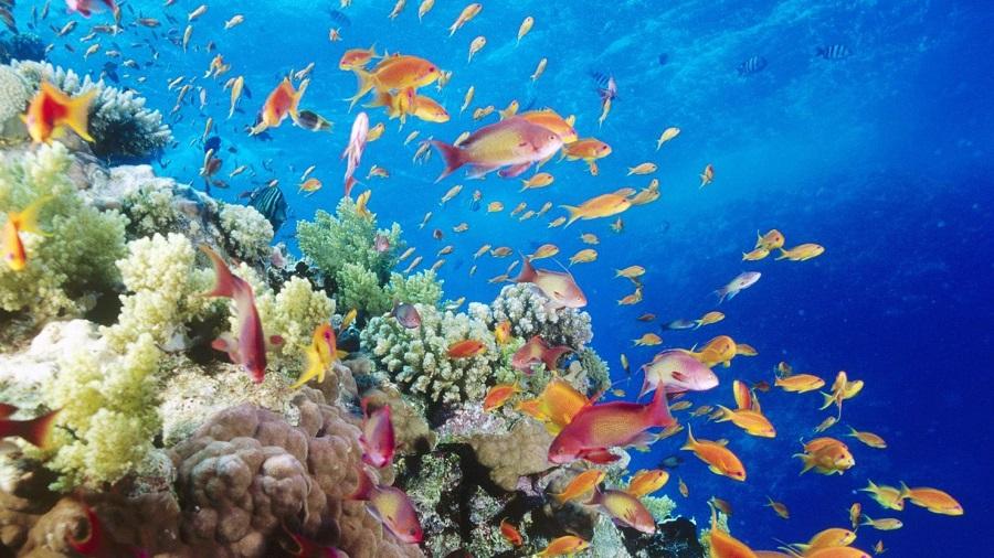 Organismos marinos de fondo