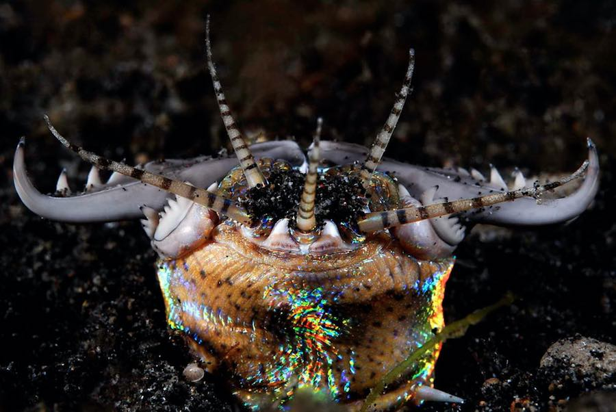 gusano bobbit 1