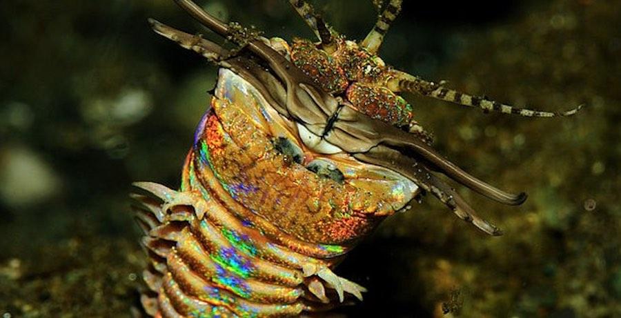 gusano bobbit 2