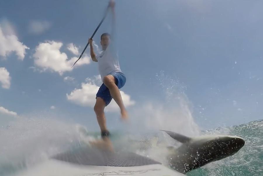 Paddel surf tiburon 1