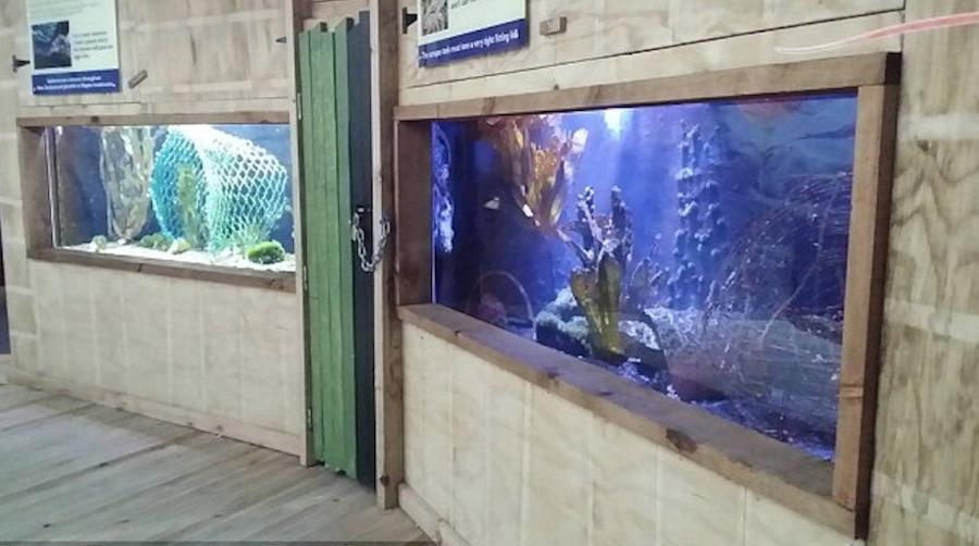 Pulpo Inky escapa acuario 1