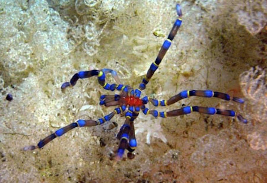 Arañas que habitan en el mar