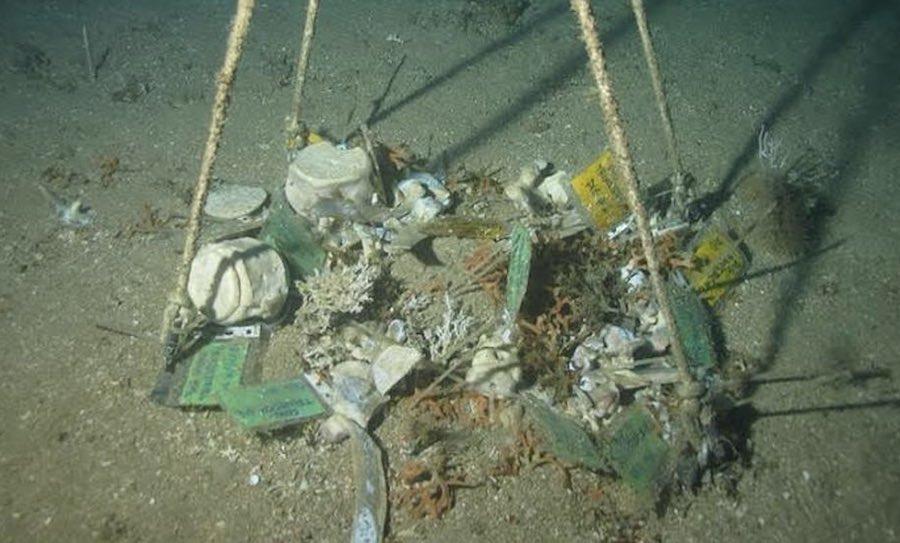 gusano profundidad mar: