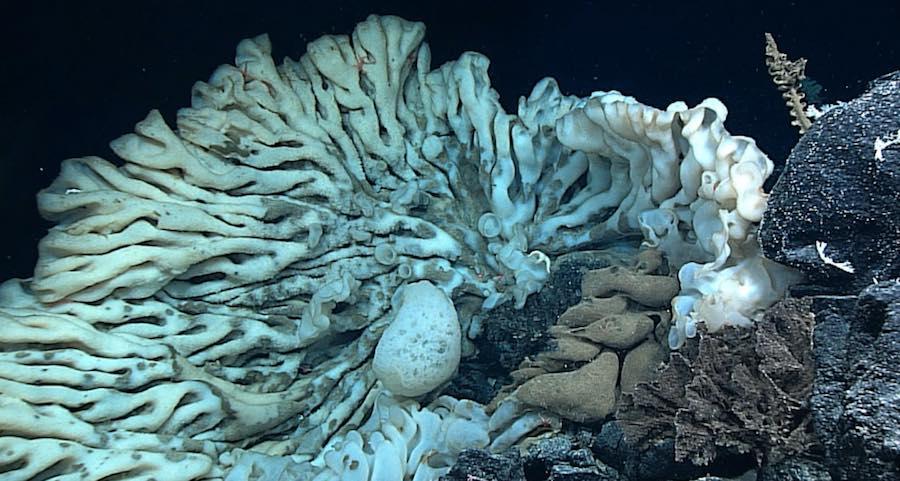 esponja mas grande del mundo
