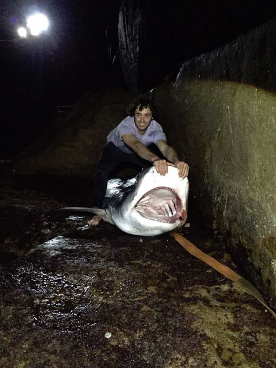 tiburon tigre 1