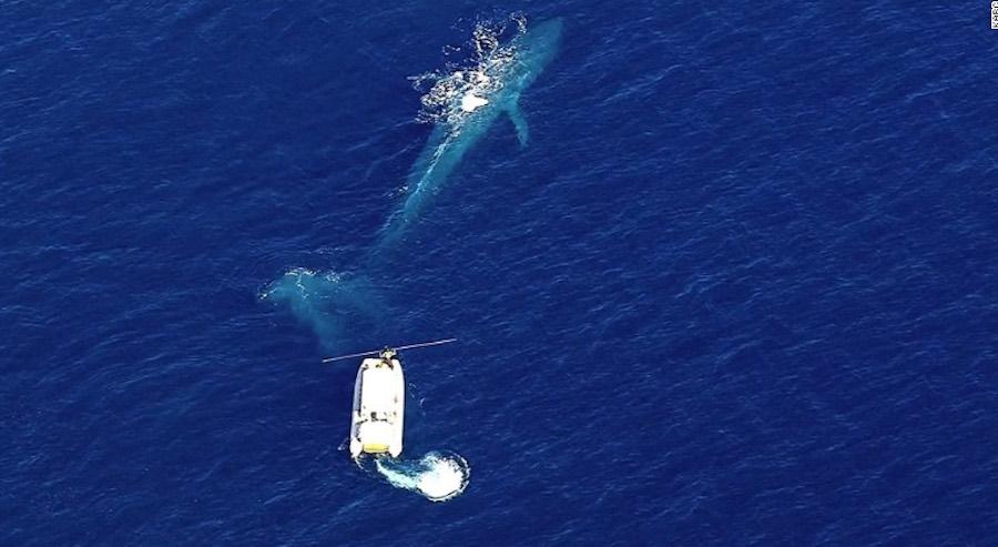 ballena azul - photo #22