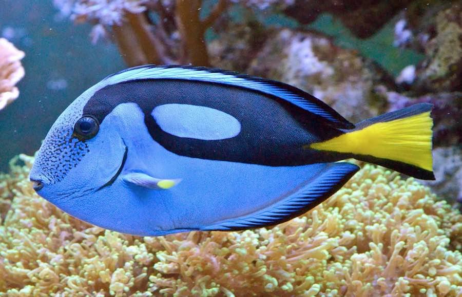 Salvando a dory el peligro del aumento de demanda del pez for Mi pez nada de lado
