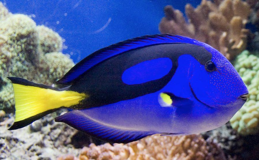 Salvando a dory el peligro del aumento de demanda del pez for Tipos de jaulas para peces