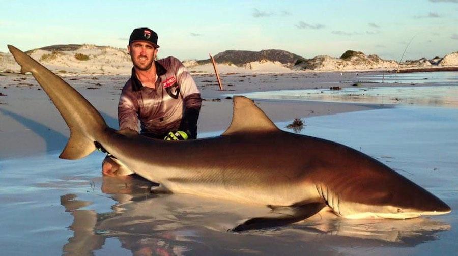 tiburones 3