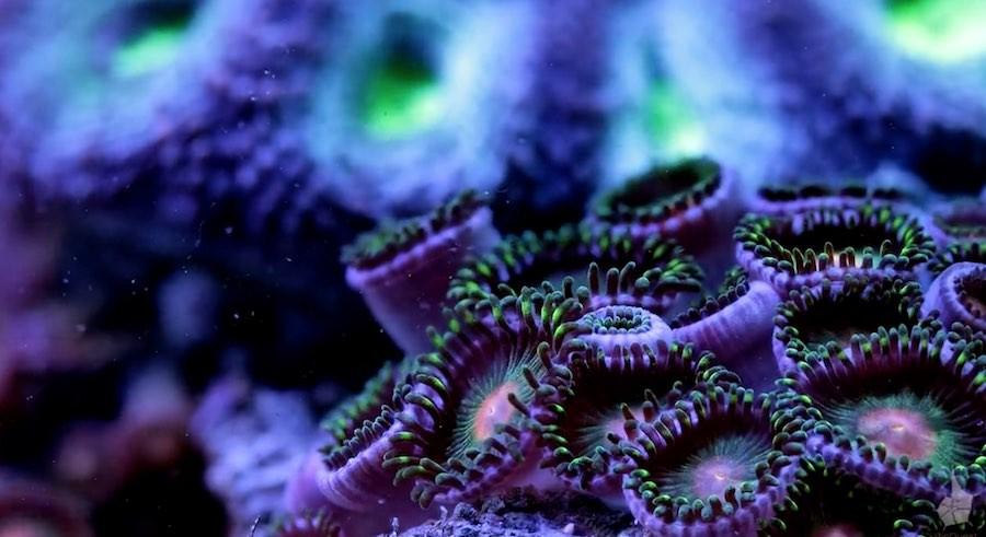 corales 4