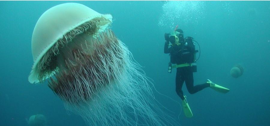 medusa nomura 2