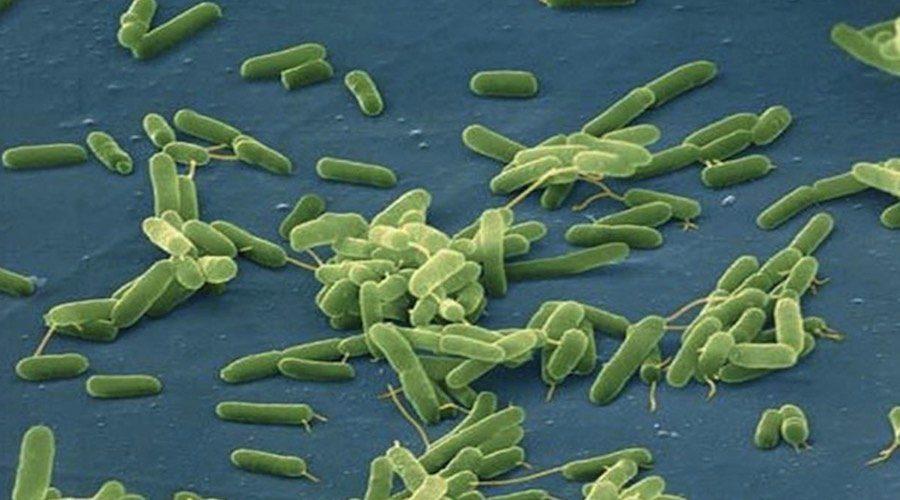 bacteria come carne 1