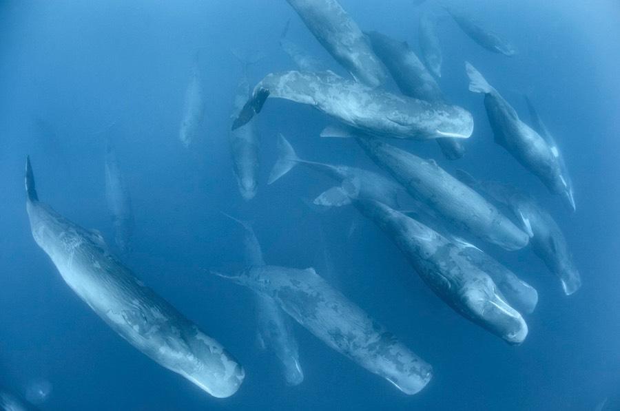 mejores fotografías de cachalotes 2