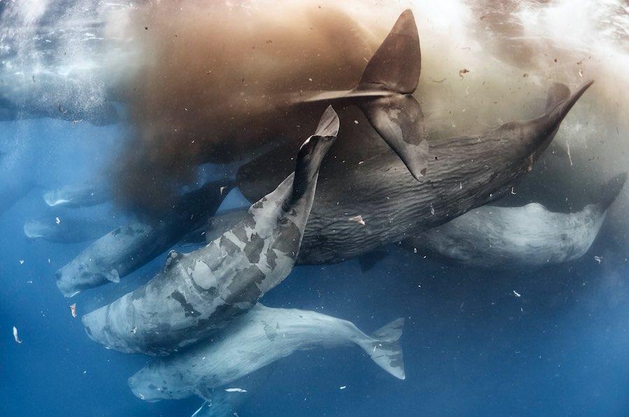 mejores fotografías de cachalotes 5