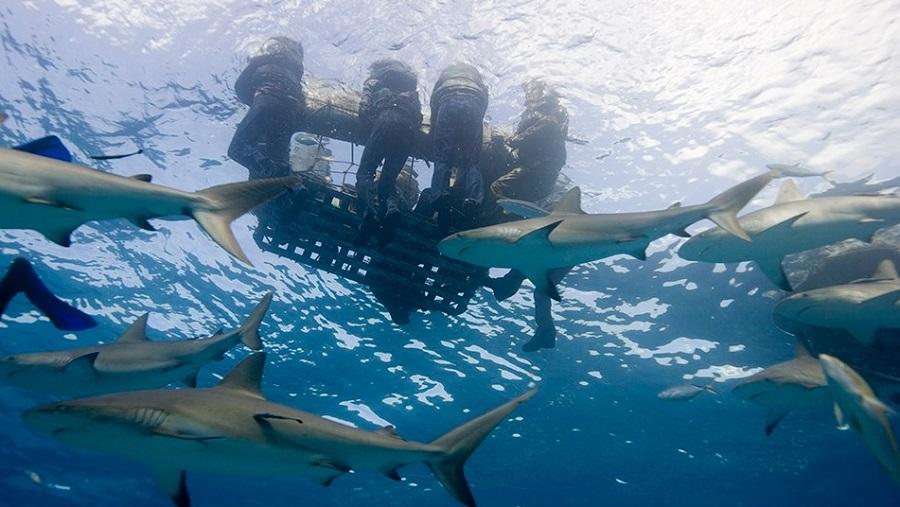 tiburones 6