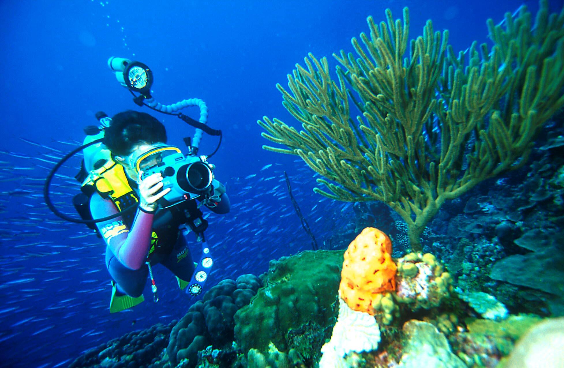 camara de fotografia subacuatica