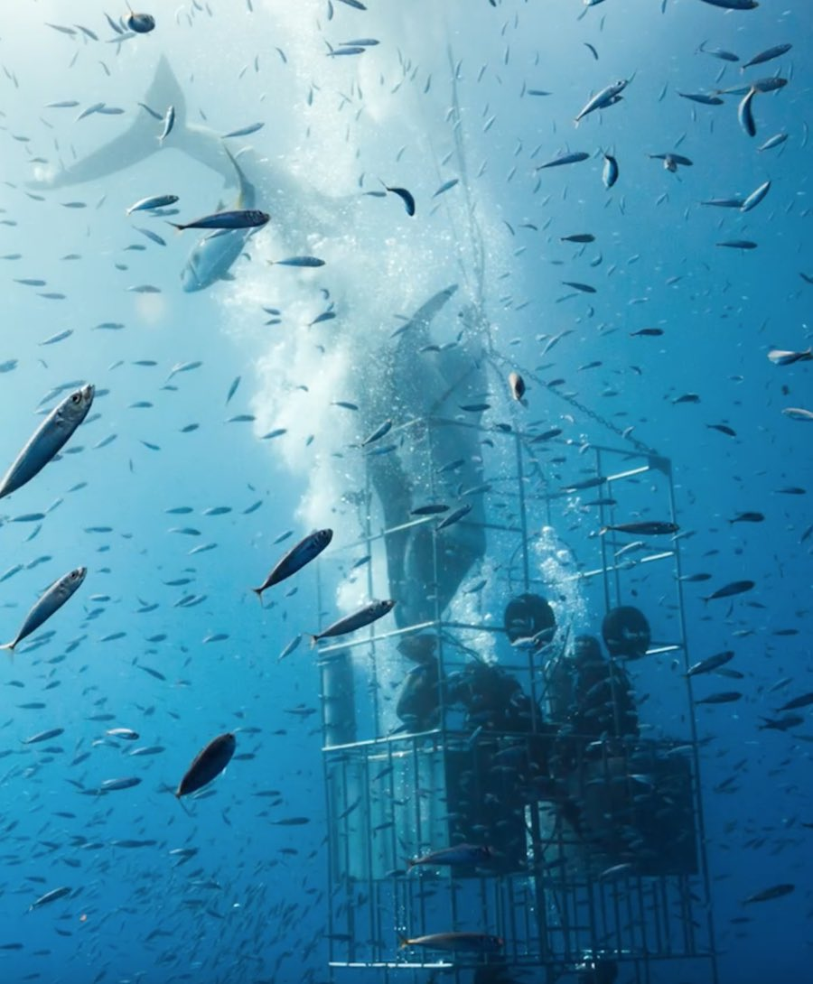 tiburón blanco-guadalupe-jaula-1