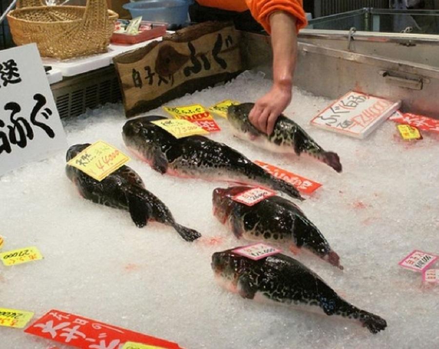 pez globo 8
