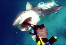 Ataque Tiburón Sarda 1