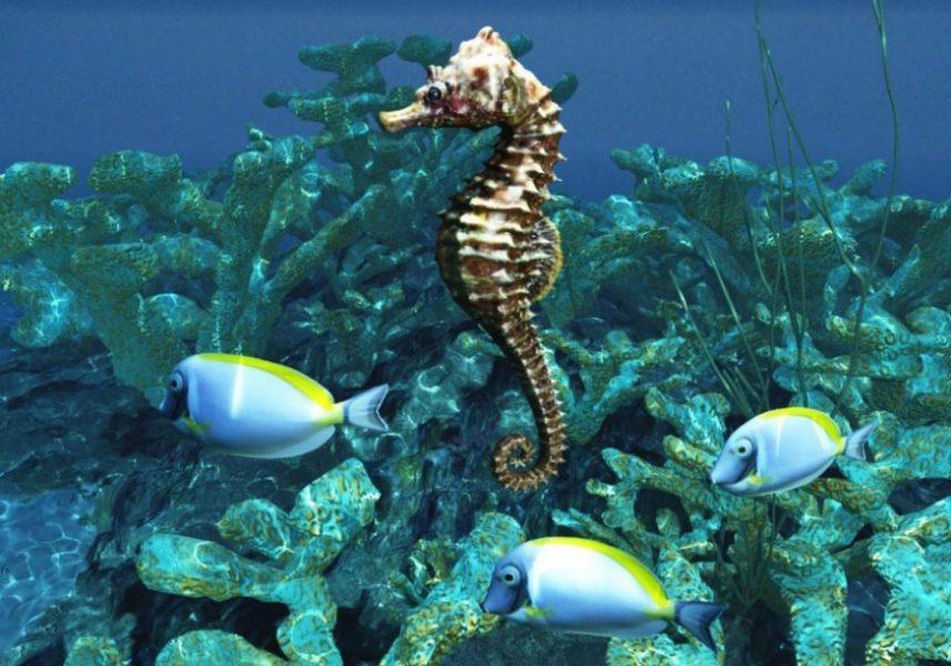 Caballito de mar en el Mar Mediterráneo