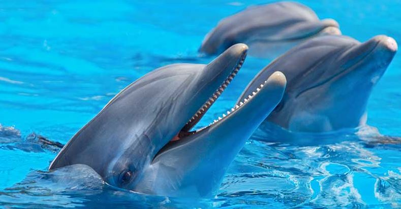 los delfines mulares