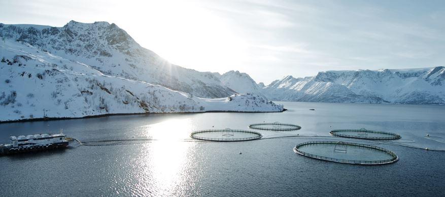 que es la acuicultura marina
