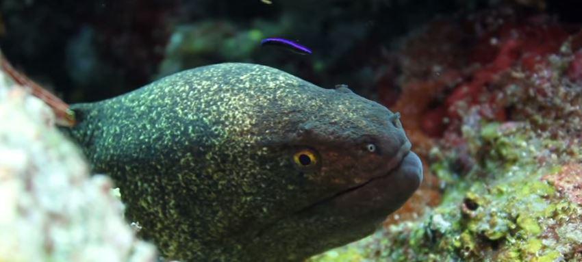 anguilas eléctricas