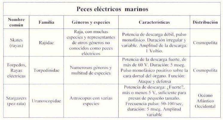 tipos peces eléctricos marinos